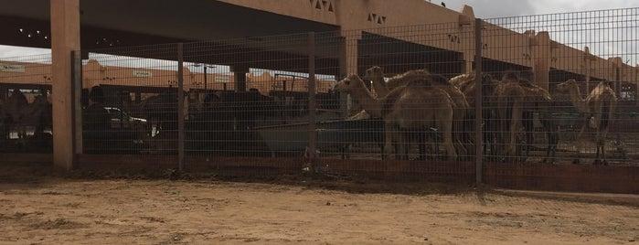 Al Ain Camel Market is one of 2016 - DXB.