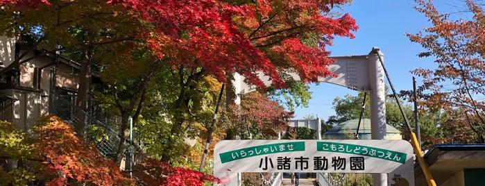 小諸市動物園 is one of Lugares favoritos de Masahiro.