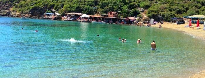 Toslaklar Koyu is one of antep yolu.