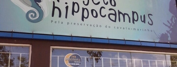 Hippocampus is one of Porto de Galinhas.