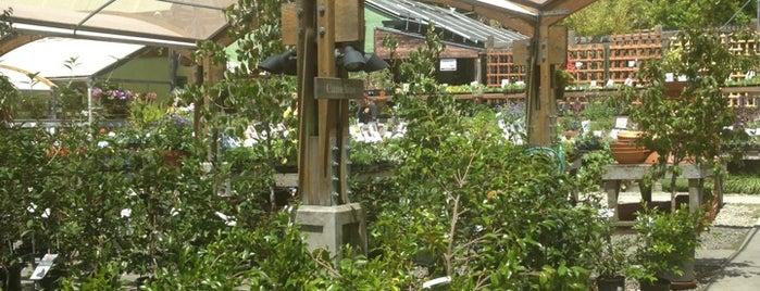 Berkeley Horticultural Nursery is one of SF.