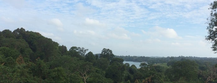MacRitchie Nature Trail is one of Singapour.