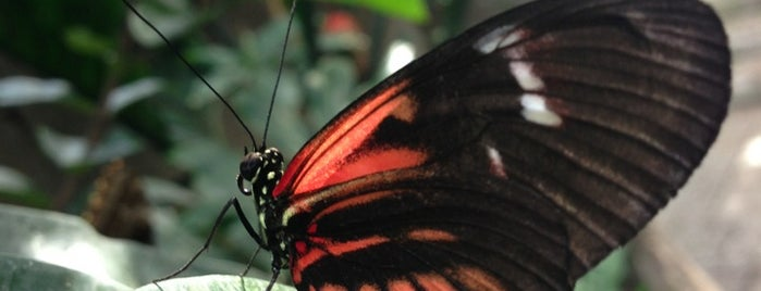 Butterfly Conservatory is one of Week NYC.