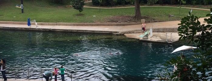 Barton Springs Pool is one of Austin.