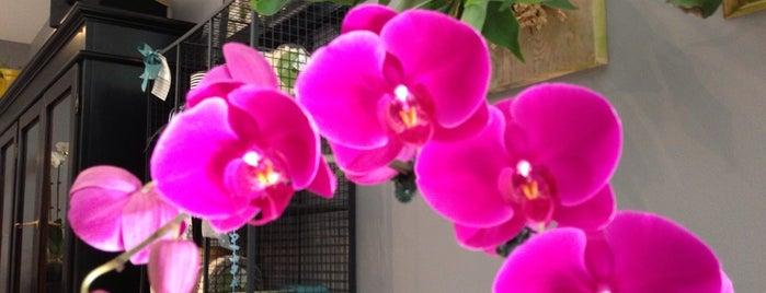Fleur de lis Florist is one of Chicago.