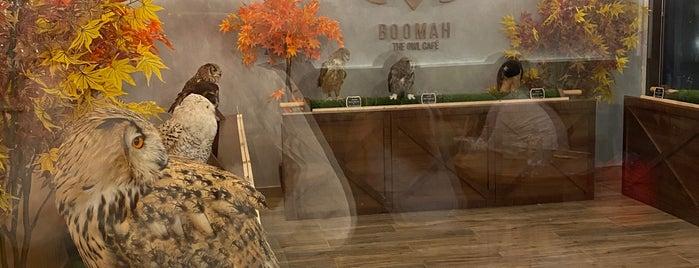 Boomah Cafe is one of Lieux qui ont plu à Fatma.