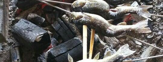 黒滝遊漁場 is one of Posti che sono piaciuti a Shigeo.