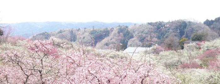 月ヶ瀬梅渓 帆浦梅林 is one of Shigeo 님이 좋아한 장소.