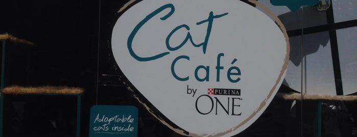 Cat Café by Purina ONE® is one of New York Adventure.