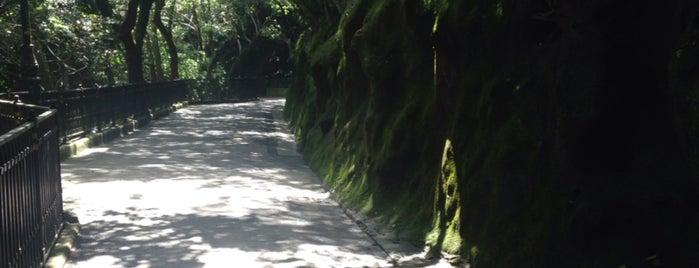 Victoria Peak is one of Lugares favoritos de Jane.
