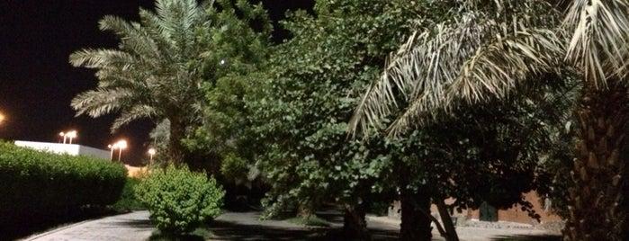 Prince Mohammad bin Abdulaziz Park || حديقة الامير محمد بن عبدالعزيز is one of Almadinah, SA.