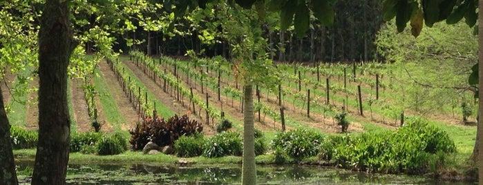 Marsden Winery is one of Best Winery's.