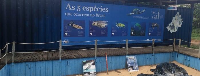Centro Visitante ICM/Bio TAMAR is one of Brazil.