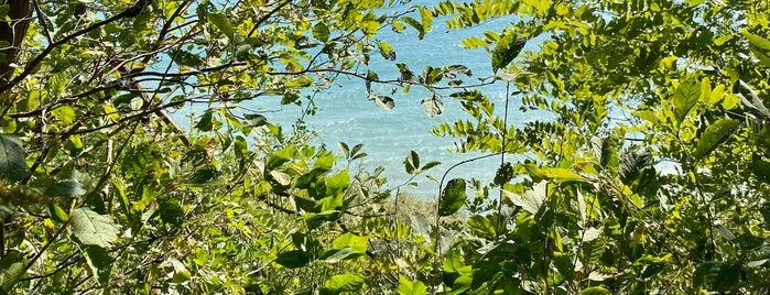 Rosetta McLain Gardens is one of Summer 2021 - Arjola.