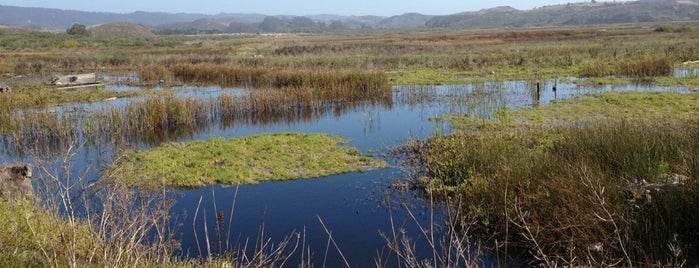 Pescadero Marsh Nature Preserve is one of HWY1: SF to Davenport.
