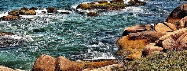 Praia da Galheta is one of Florianópolis.