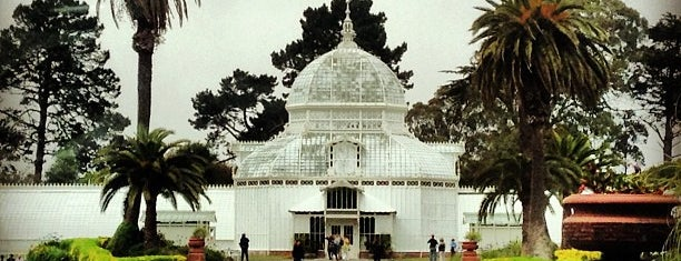 Golden Gate Park is one of San Fran-The City places to see.
