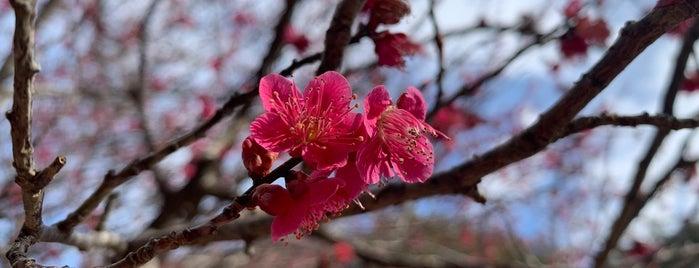 Arashiyama Park is one of Japan.