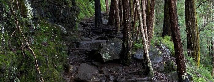 Makiki Loop Trail is one of Oahu.