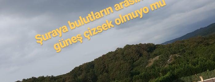 Best Western Şile Gardens Hotel & Spa is one of สถานที่ที่ Zeynep ถูกใจ.