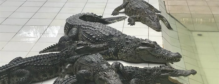 Phuket Crocodile World is one of Posti che sono piaciuti a Ольга.