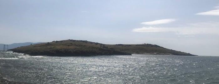 İncir Adası is one of Foça / İzmir.
