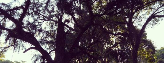 Aquário Parque da Luz is one of Sampa.