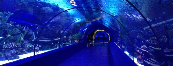 Antalya Aquarium is one of Turkey.