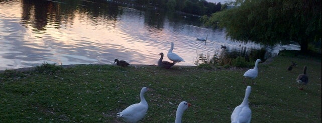 Roath Park is one of Local's Guide to Cardiff.
