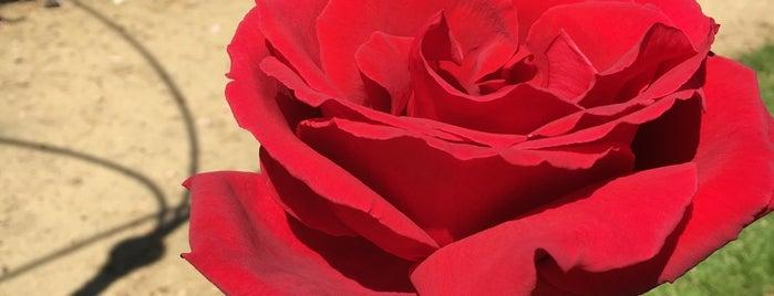 Blenheim Palace Rose Garden is one of Gio 님이 좋아한 장소.