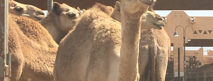 Al Ain Camel Market is one of Locais curtidos por Darwich.