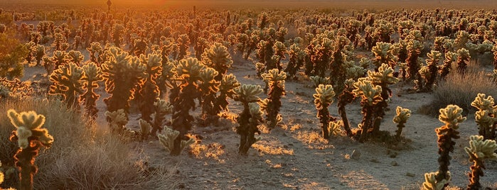 Cholla Cactus Garden is one of Palm Springs ✌️.