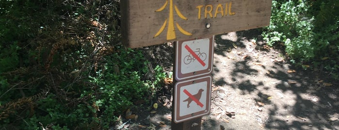 Pioneer Tree Trailhead is one of cnelsonさんのお気に入りスポット.