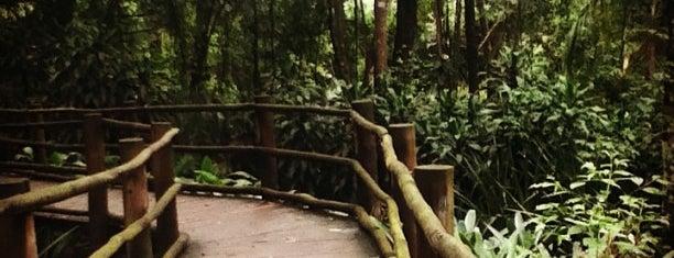 Jardim Botânico de São Paulo is one of Descobrindo SP.