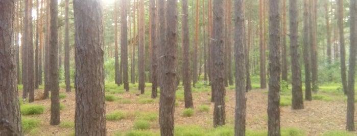 Лес под Вышгородом is one of Lieux qui ont plu à Lena.