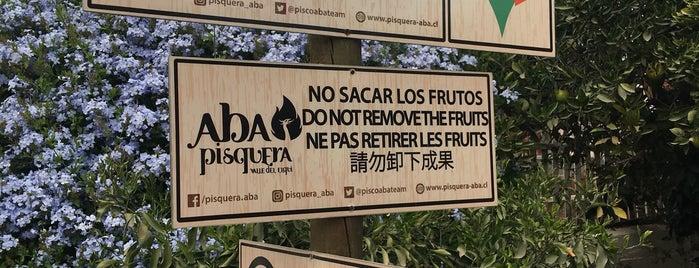 Pisquera ABA - Valle del Elqui is one of Tempat yang Disukai Jay.