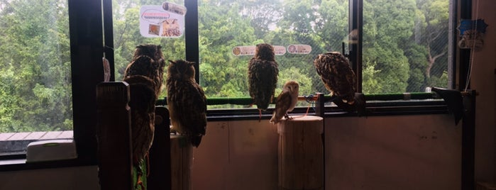 Owl Village is one of Tokyo on the JR Yamanote line.