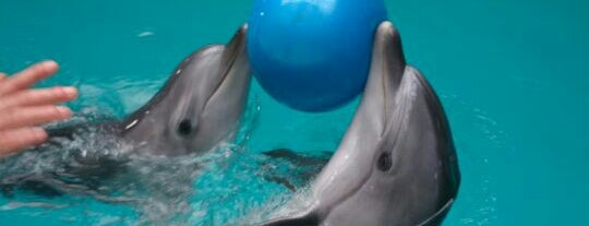 Dolphinarium is one of Istanbul.