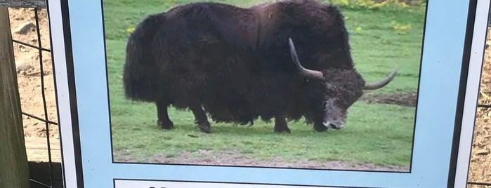 Animal Farm is one of Posti che sono piaciuti a Bianca.