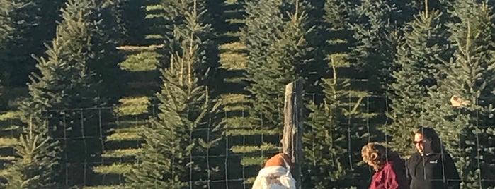 Bell's Christmas Trees is one of Orte, die Adam gefallen.
