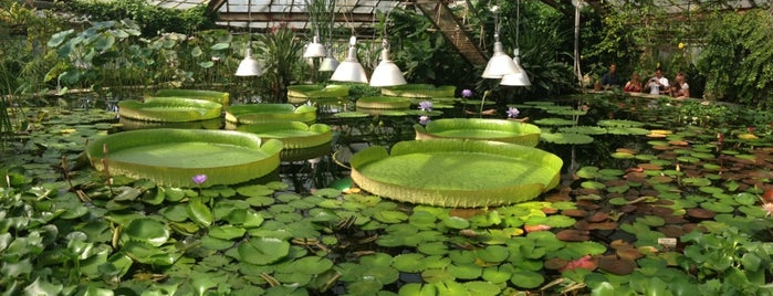 Botanical Garden is one of The places, which I really would like to visit.