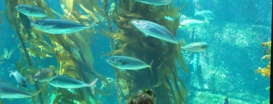 Birch Aquarium is one of City in Motion.