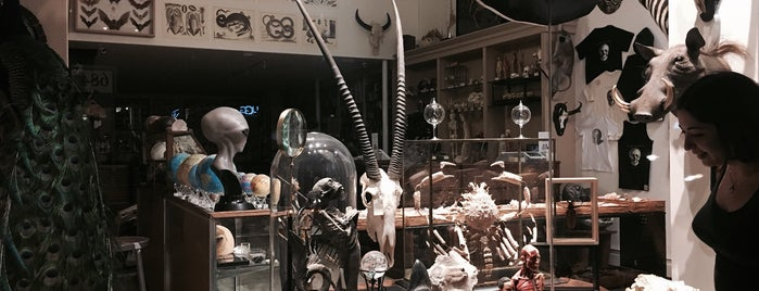 The Evolution Store is one of NYC Hidden Attractions.