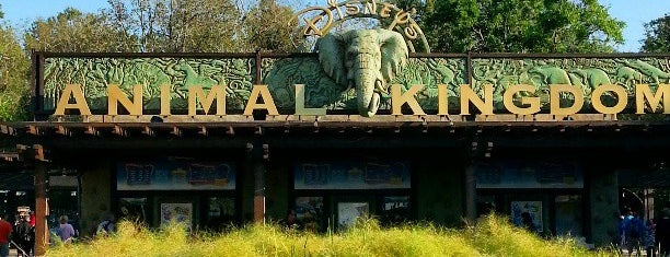 Disney's Animal Kingdom is one of Favorite Places to visit!.