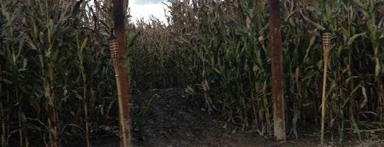 Bob's Corn Maze and Pumpkin Patch is one of Where I want to travel.