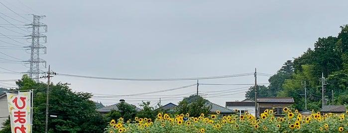 ひまわり畑 is one of うっど🌲さんの保存済みスポット.