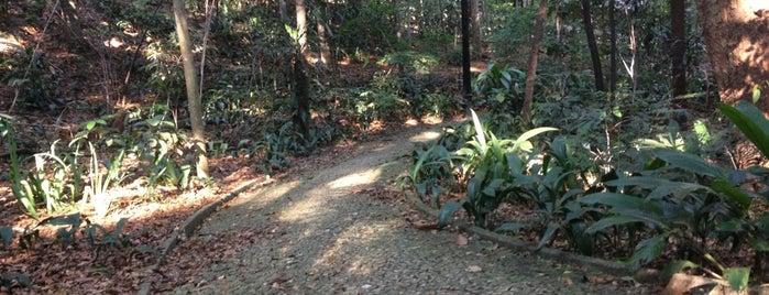 Parque Tenente Siqueira Campos (Trianon) is one of Programa A2 ;).