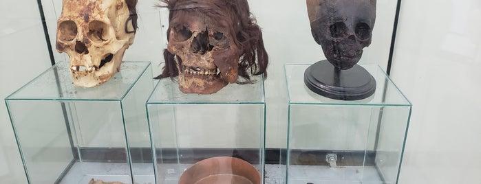 Museo Histórico Paracas Incas y Otras Culturas is one of World Ancient Aliens.
