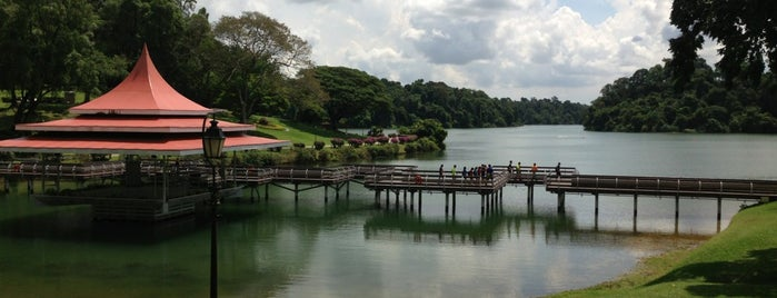 MacRitchie Reservoir Park is one of Favourite places in the world.