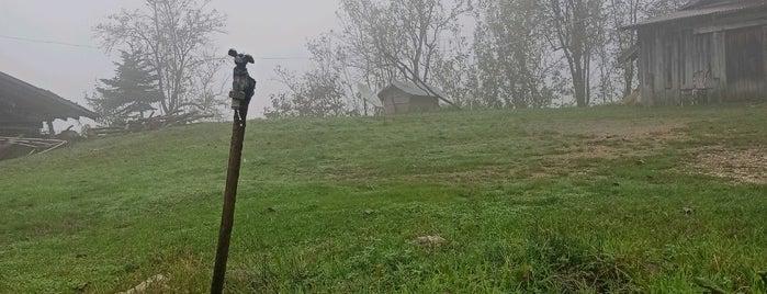 Boztepe Köyü is one of Sakaryanın Kıyısı Köşesi.